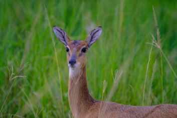 selective focus photo of deer