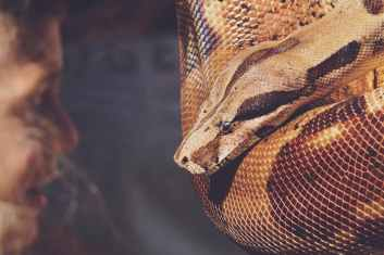 close up photo of reticulated python